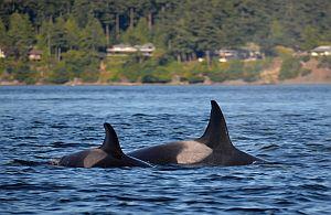 Whale und Delphin Watching. Ihre VIP-Gäste werden begeistert sein. Incentive Reisen die unvergesslich sind.