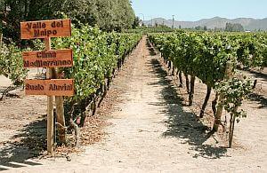 Weinreisen nach Chile oder Argentinien. Unsere Incentive Agentur organisiert das Komplett-Paket.