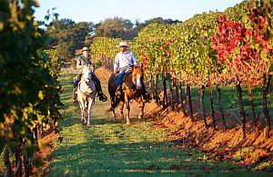 Ihre Incentive Reise Gruppe lernt in Weinseminaren von der Pike auf alles über Weine.