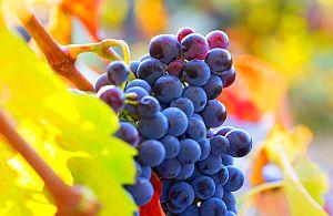 Nicht nur für Genießer sind unsere Weinreisen als Incentives sehr beliebt. Kultur, Kunst und Vielfalt sind uns auf den Weinreisen sehr wichtig.