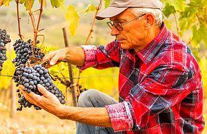 Erleben Sie auf Ihrer Weinreise die schönsten Weinanbaugebiete der Welt. Machen Sie mit bei der Weinlese.