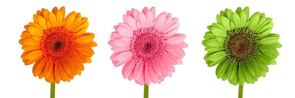 Drei bunte Blumen. Kundenstimmen von all about event.